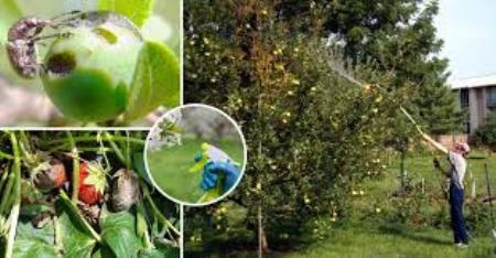 Обнаружение на деревьях разных насекомых и вредителей и принятие мер против них, обработка и удобрен3857508